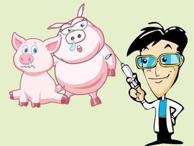只有做好安全防疫,才能让你零风险养猪!